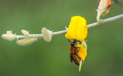 Could Hemp Really Help The Bees?
